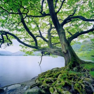 A Tree Planted by Water (Jeremiah 10-11:17; 17)