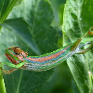 A Chameleon for Christ (1 Corinthians 9-11)