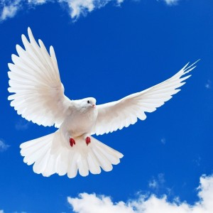 Living at Peace (Romans 11-13)